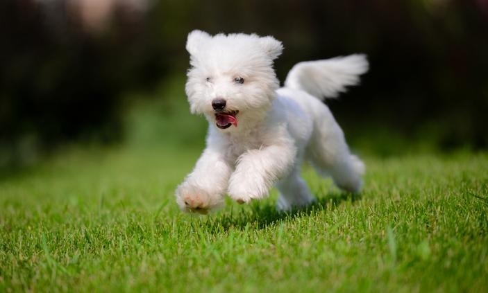 senior heath benefits for pet ownership